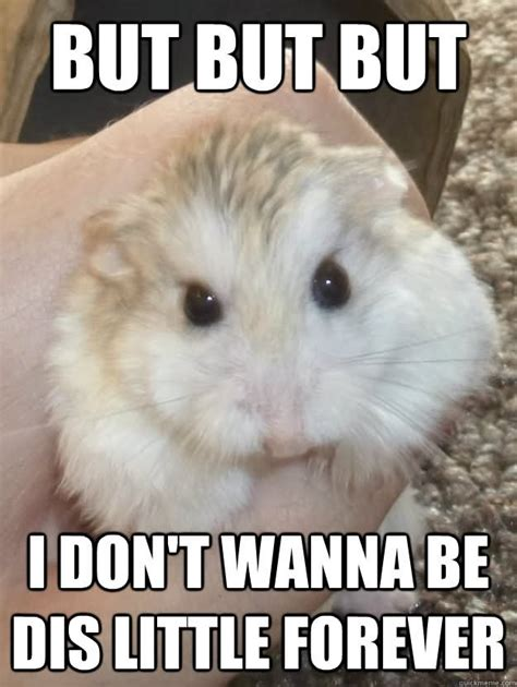 Dont Be Sad Meme - 30 most funny hamster meme pictures and photos