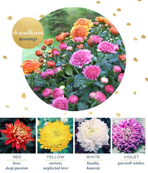 flower color meanings chrysanthemum meaning and symbolism ftd
