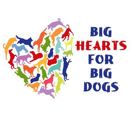 puppy adoption miami big hearts for big dogs rescue miami petfinder
