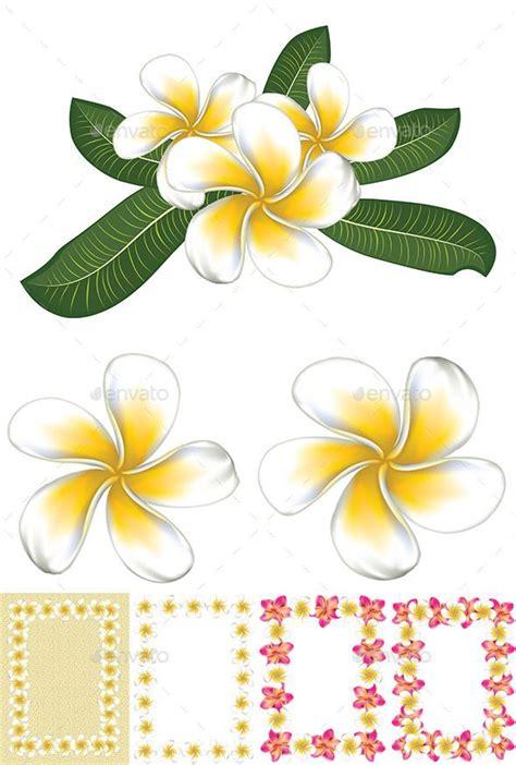 Bunga Plumeria Frangipani Pink Marine 79 best hawaiian flowers ideas images on