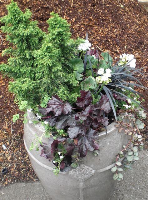 jardin d hiver en pot plantes ornementales 224 privil 233 gier trucs et astuces