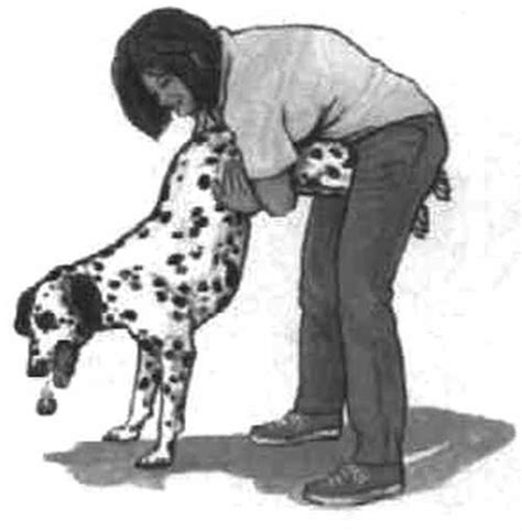 heimlich maneuver for dogs do you what to do if your is choking performing heimlich maneuver on dogs