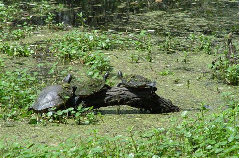 how to preserve your historic barataria preserve jean lafitte national historical park