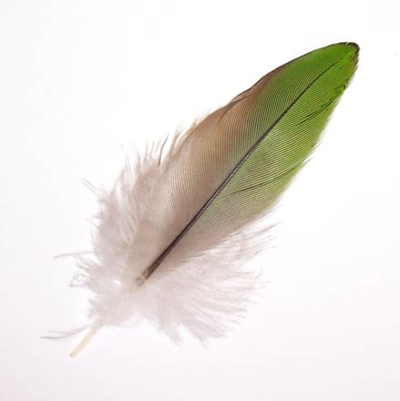 Free green feather 1 stock photo freeimages com