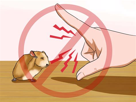 Correct Way To Make A Bed by How To Hold A Hamster 14 Steps With Pictures Wikihow