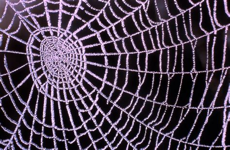 spiders web yellowstone s photo collection