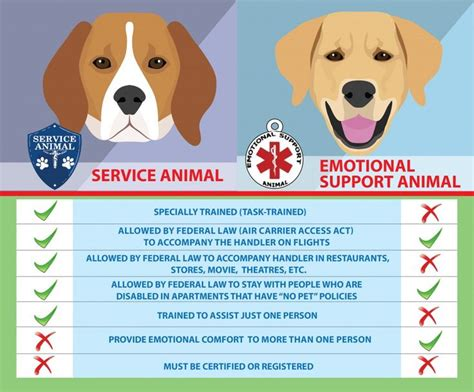 best emotional support dogs best 25 emotional support animal ideas on emotional support
