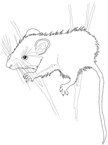 deer mouse coloring page deer mouse coloring page free printable coloring pages
