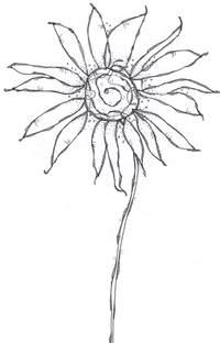 Black Shower Curtain With White Flower Carol Sloan Studios Flower Line Drawings