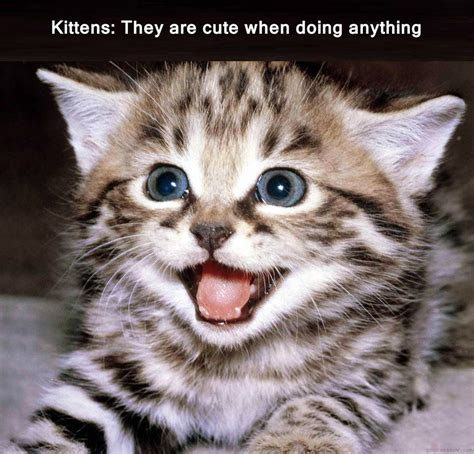 Cute No Meme - kitten meme by unuspartum on deviantart