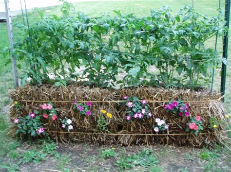 Planters Hay by Straw Bale Gardening Great In All Climates From The