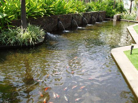 backyard fish pond modern fish ponds http lomets com