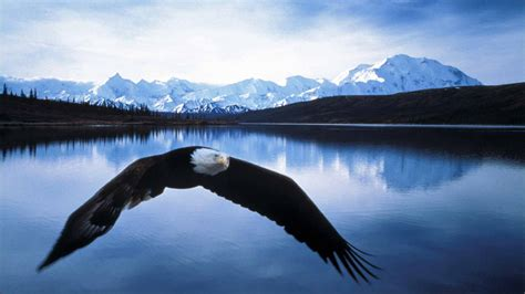 beautiful alaska top places to visit in beautiful alaska topthingz