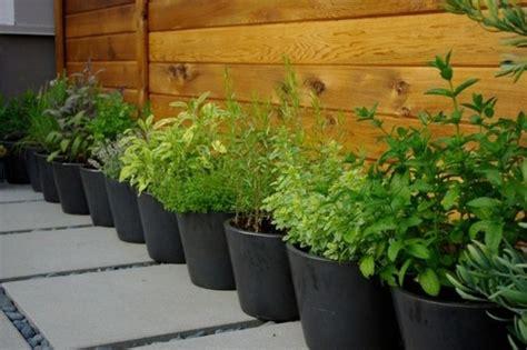 grow  herb garden design ideas  outdoors