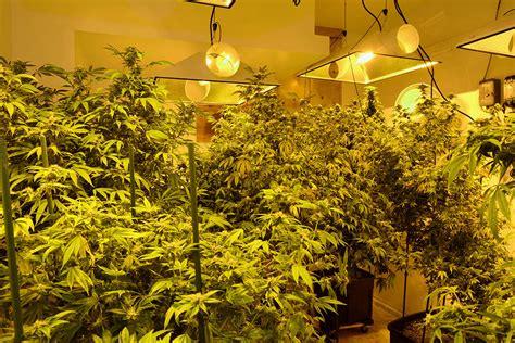 build   cannabis grow room growers choice