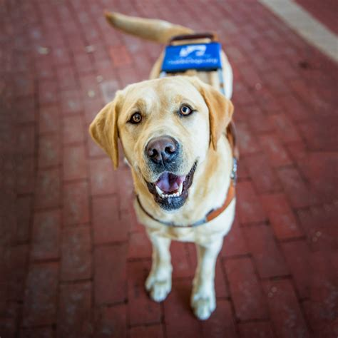 puppy guide southeastern guide dogs