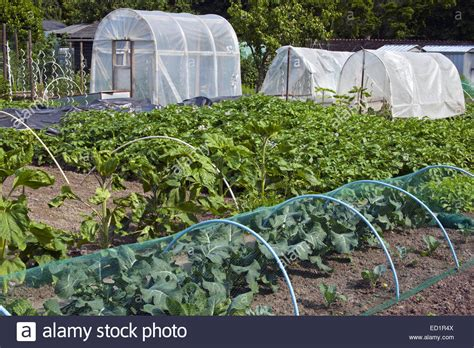plastic greenhouse and tunnels and vegetables growing in