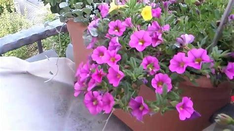 Pupuk Daun Bunga Hias 15 jenis macam aneka tanaman hias gantung dan daun 2017