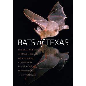bats of texas kera