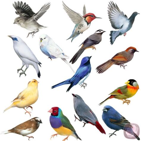 imagenes animales aves clasificaci 243 n de los animales clasificaci 243 n de los animales