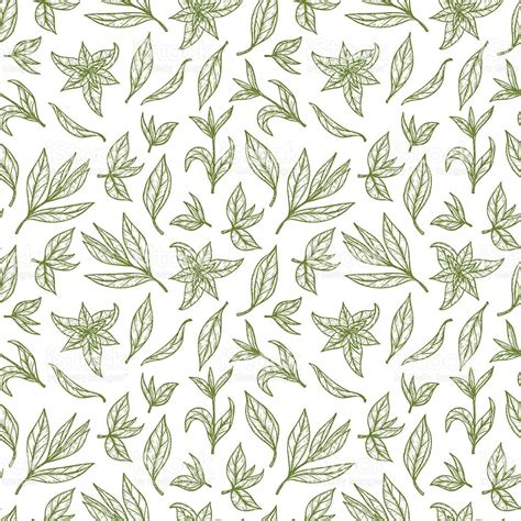 Tea Leaf Pattern Vector   hand drawn green tea leaves seamless pattern vector