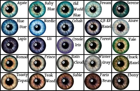 eye color eye color chart eye color and color charts on