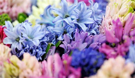 i significati dei fiori significati e simbologie dei fiori di primavera casa