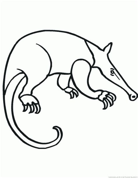 anteater coloring pages