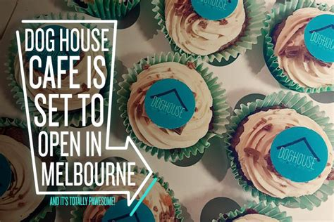 dog houses melbourne coming soon melbourne s first dog cafe true local blog