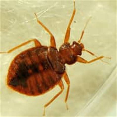 bed bug exterminator indianapolis blog post page 25