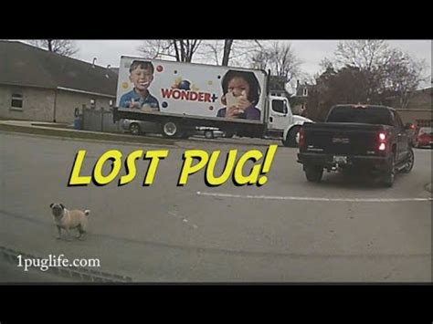 lost pug reviving an honda engine funnydog tv