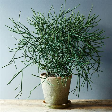 Best Indoor Plants For Oxygen by 5 No Kill Houseplants For Any Home Huffpost