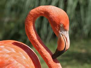 pink flamingos pink flamingo related keywords amp suggestions pink