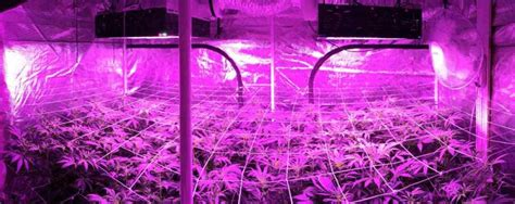 led cannabis grow lights   led sourcing agent