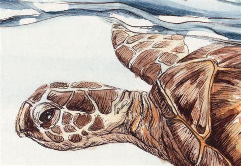 sea turtle ls tiere wild oder zahm