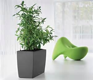 indoor office plants for office environment office