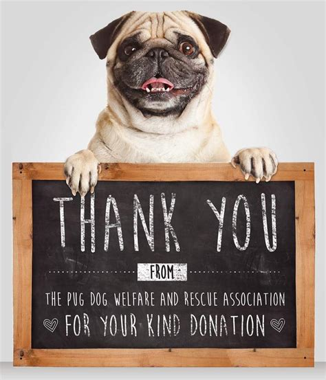 pug events news events the pug welfare rescue association rescuing rehoming pugs