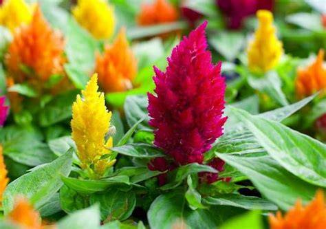 heat l for plants 22 flowers for sun and heat tolerant flowers