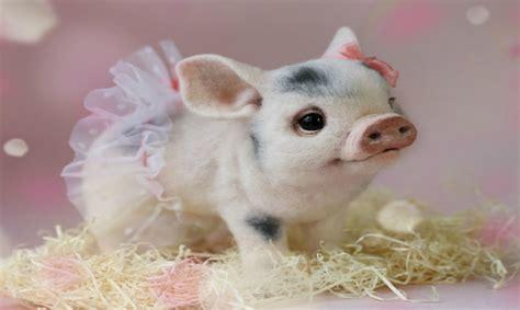 imagenes de animales adorables adorables animales 161 hechos con lana parte ii
