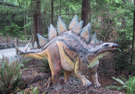google images dinosaurs stegosaurus google search dinosaurs pinterest