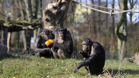 zoologischer garten rabatt zoo magdeburg gutschein f 252 r 50 g 252 nstigeren eintritt