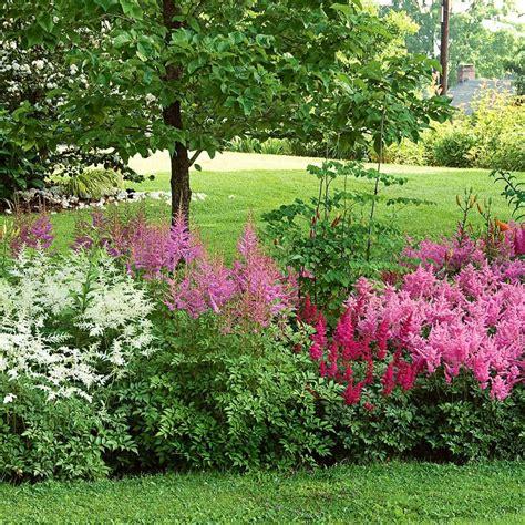 Flower Plants For Garden Cornerstone Astilbe Collection White Flower Farm