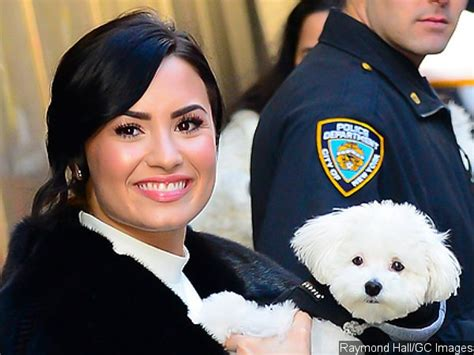 demi lovatos dogs tragic death new details about what demi lovato heartbroken after her beloved dog died in