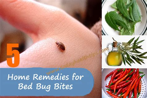 rid  bed bugs  bed bugs solutions  home