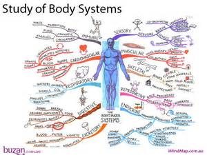 Body systems mind maps and the study on pinterest