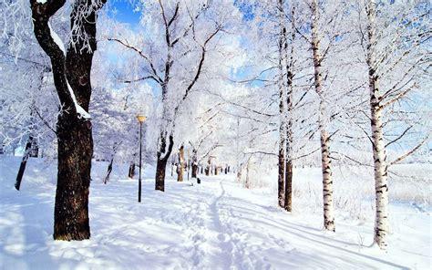 imagenes arboles invierno descargar la imagen en tel 233 fono paisaje invierno