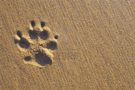 dog print wallpaper dog paw print and bone background