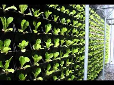 green design ideas easy vertical green wall design ideas