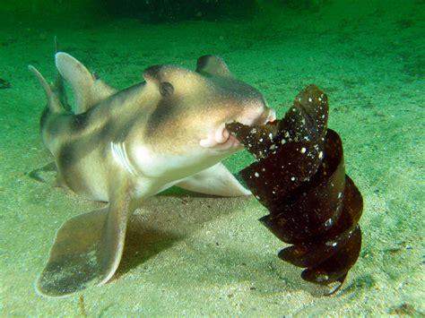 baby shark egg cookiecutter shark oceanuts