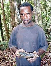 Kayu Gaharu Merauke Papua taman baca papua kayu gaharu sang pohon dewa